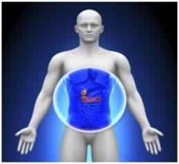 Внешний вид и положение желчного пузыря в брюшной полости