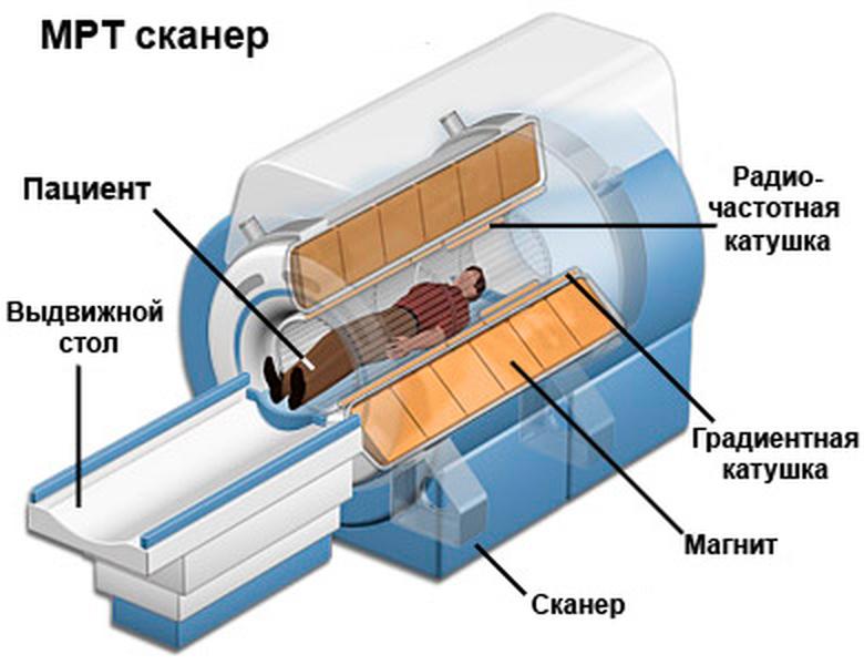 Строение МРТ